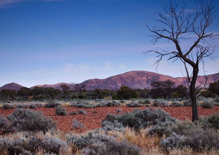 Outback landscapes, Farina 2012.