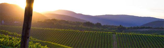 Wijnwandelen in de achtertuin van Zeus. Griekse kwaliteitswijnen veroveren gestaag de wereld. Ruige Griekse binnenlanden herbergen wandelparadijsjes tussen wijnranken; geen wonder dat SNP hier gaat wijnwandelen. Griekenlandkenner Frederiek Lommen schreef het boek Druiven en Droesem; een reis langs Griekse wijngaarden. Ze vertelt honderduit over het land van wijngod Dionysos. Lees meer in SNP.NL magazine 29.