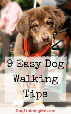 Here are 9 easy dog walking tips that will make your daily outing much more enjoyable. Find out what equipment you need, how long you should walk for, and the most common issue when walking your dog. @KaufmannsPuppy
