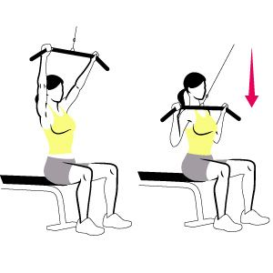 Lat Pulldown:  Sit at a lat-pulldown station and grab the bar with a shoulder-width overhand grip, arms straight and torso upright.     Without moving your torso, pull the bar down to your chest as you squeeze your shoulder blades together. Pause, then slowly return to start. That's one rep.