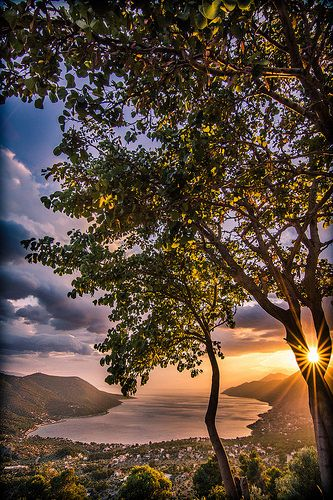 Sunset through the tree | Yermenos, Attica, Greece