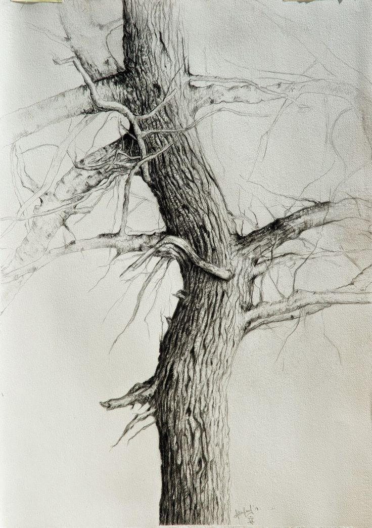 al mazzaglia: I have a tree - realization and material: graphite and charcoal produced by Viarco (portugal), carbon  Contè a Paris, Lyra and Derwent, Paper Graphia.
