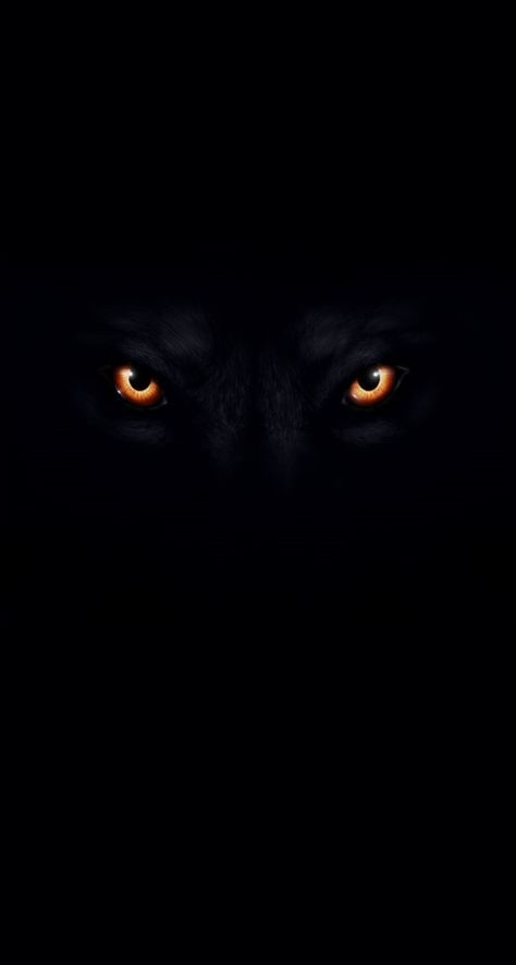 Wolf Picture With Black Background Black And White Wolf Wallpaper