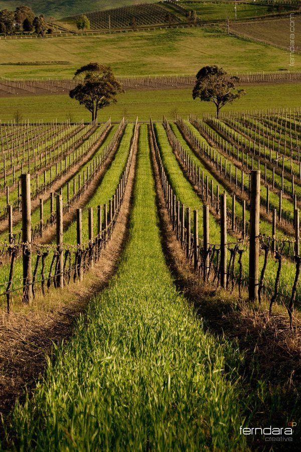 De Bortoli Vineyard, Yarra Valley, Victoria, Australia. Photo: ~darukster on deviantART