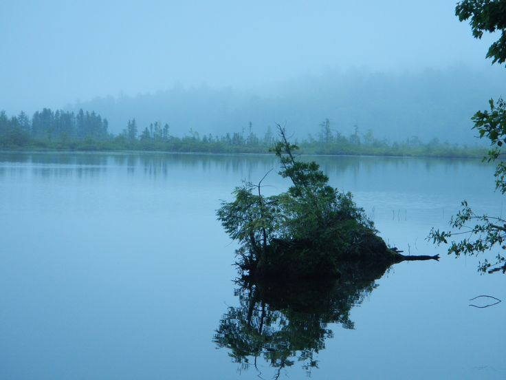 Reflections on a foggy evening. Central Maine lake.