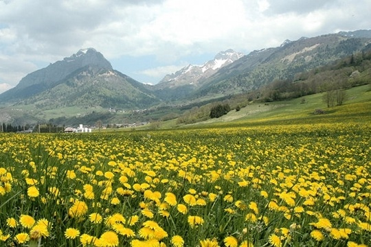 Le massif des Bauges in summer, French Alps ~ So peaceful