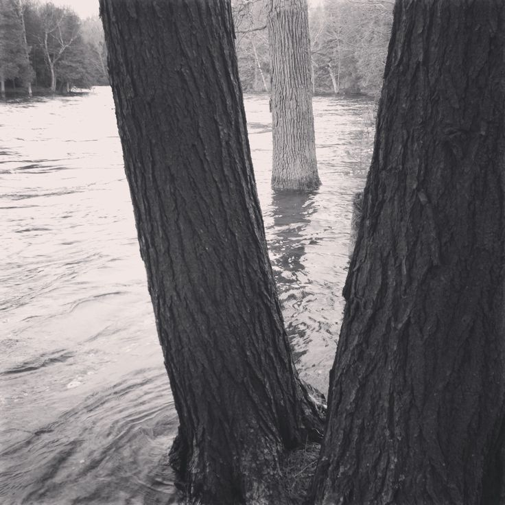 Good Friday, 2014. Water is about 6m above the river bank and within about 30cm of the bunkie. #thebeave