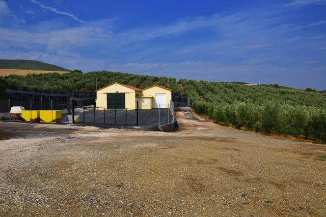 Ölmühle im Hinterland von Chalkidiki