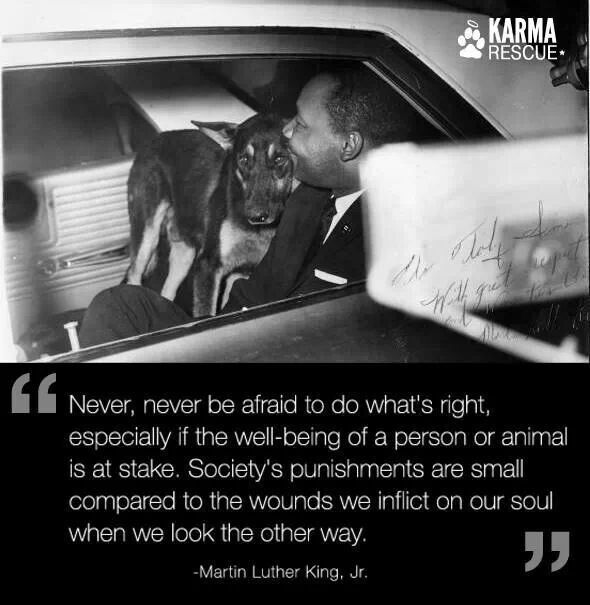 Martin Luther King Jr Never Be Afraid To Do What S Right I M