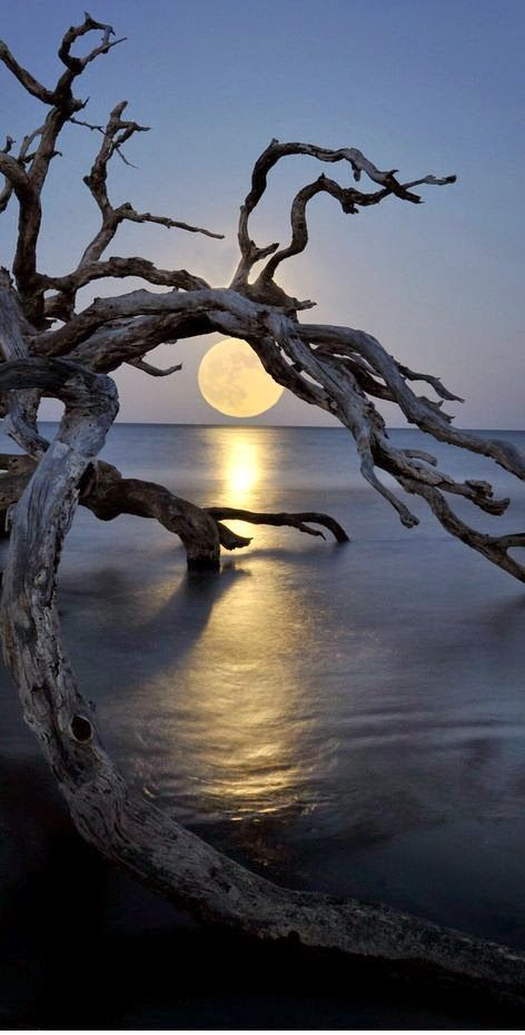 Full moon At Driftwood Beach, Jekyll Island, GA.                                                                                                                                                      More
