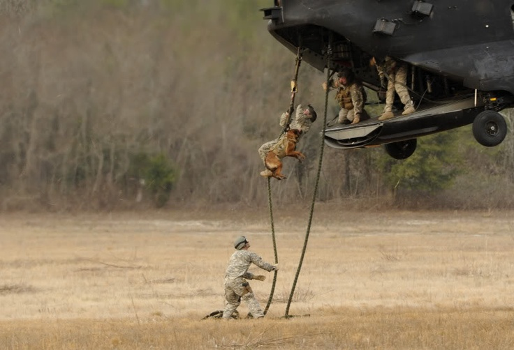 A U.S. Soldier assigned to the 4th Battalion, 10th Special Forces Group fast ropes with a military working dog out of a CH-47 Chinook helicopter near Tallahassee Regional Airport, Fla., Emerald Warrior 2011.