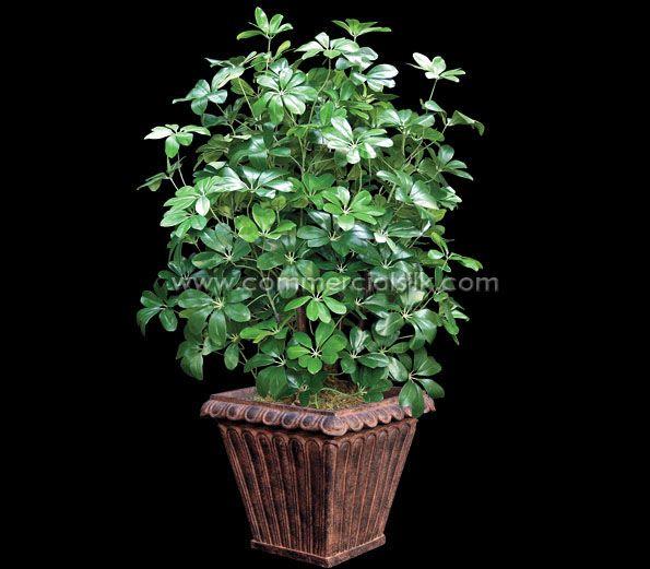 Modeled after a living Dwarf Schefflera plant, this bush ...