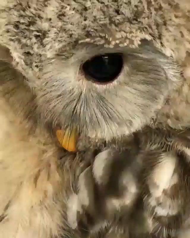 Cutest Owls – Gefiederte Freunde