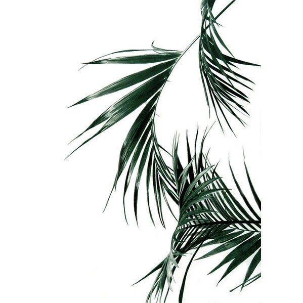 Palm print available online. The original was hand drawn with pencil crayons (insane right!?) by the lovely artist Rachel De Vita. Scoop yours up today #print #madeincanada #shoplocal