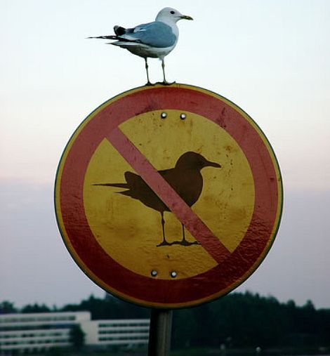rebellious: Like A Boss, The Police, Funny Stuff, Birds, Photo, The Rules, Animal, Reading Signs, Likeaboss