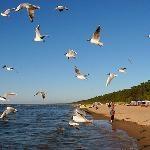 One of the most beautiful beaches in whole Baltic region - Review of The beach of Jurmala, Jurmala, Latvia - TripAdvisor