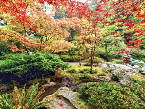Fall Color in Seattle's Japanese Garden in the Arboretum