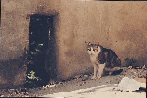 ¿Y tú qué miras? by sergioski1982 #Cats #Gatos #FotoGatetes