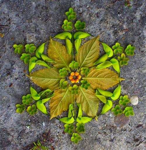 leafs arranged to look like a mandala.  Hmm....could possibly press them