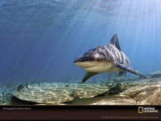 Info Ikan: 5 Ikan Paling Berbahaya di Dunia yang Pernah Ada