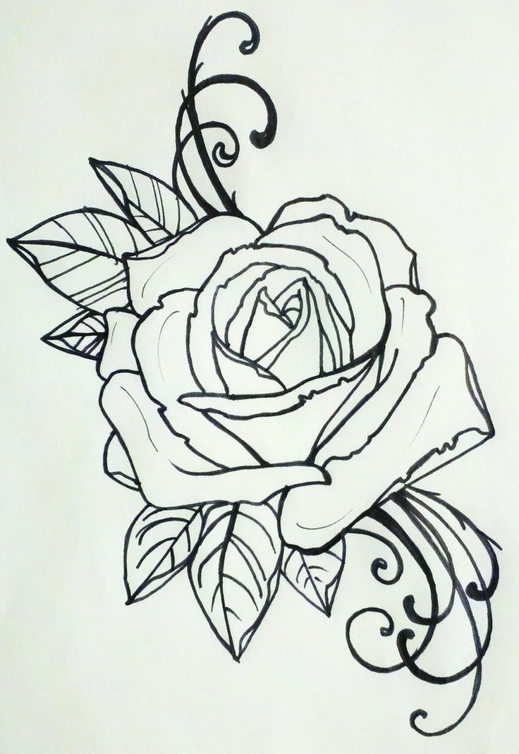 A drawing, a starting point idk   Rose tattoos