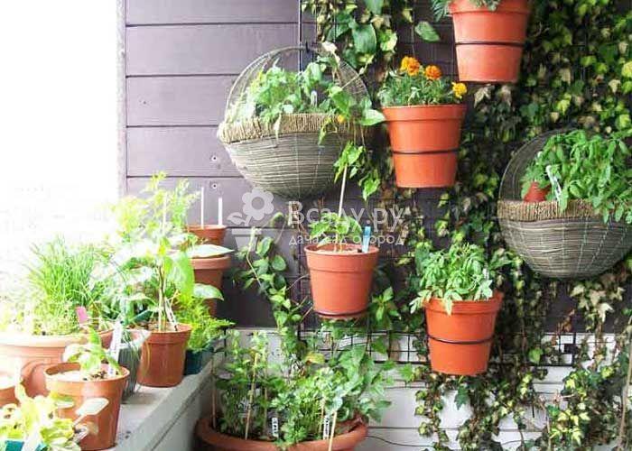 Время возвращать домой балконные растения