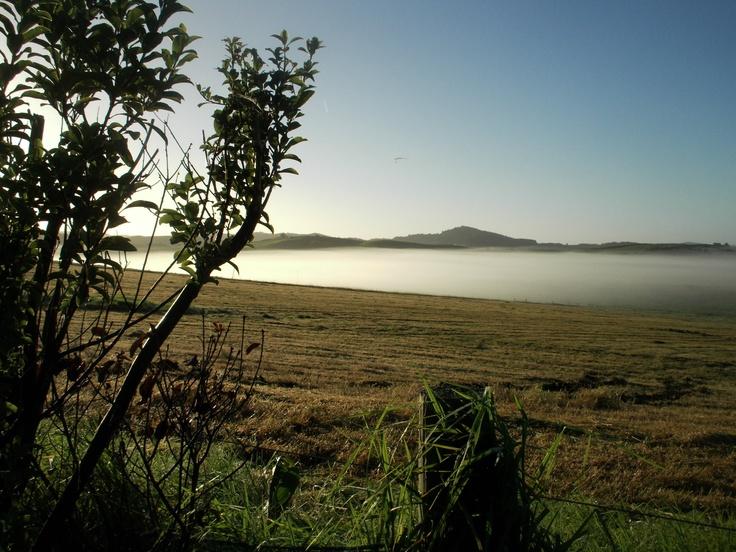 Ruawai NZ - A foggy morning.