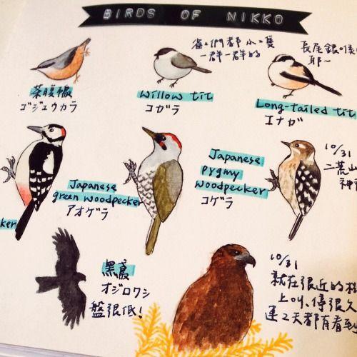 2015/1/12 Birds of Nikko