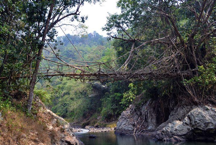 Jembatan Akar di atas sungai Ciseumet, Baduy