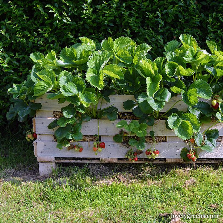 How to Make a Better Strawberry Planter using Pallet Wood
