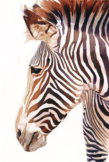 """Zebra Bust"" Zebra Wildlife Watercolor by Paul Jackson"
