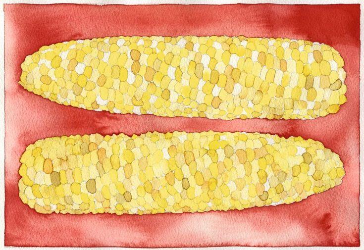 maiz transgenico mexico
