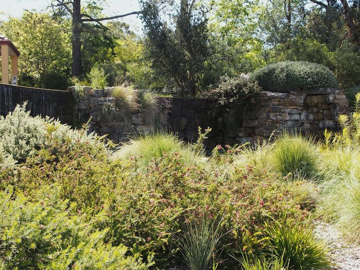 21 best walcott native garden canberra images on for Garden design ideas canberra