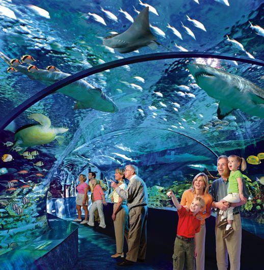 Ripley's Aquarium Myrtle Beach SC