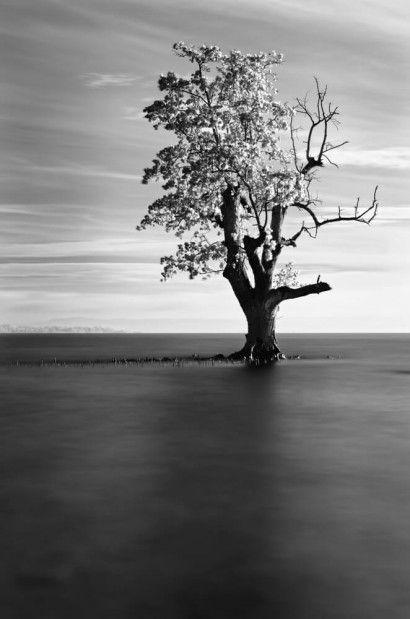 Solitude - Michael de Guzman | Crie seu quadro com essa imagem https://www.onthewall.com.br/solitude