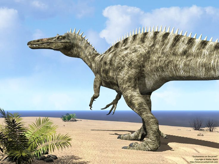 Suchomimus on the prowl