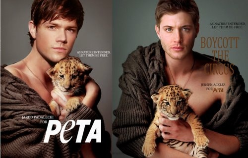 Jared Padalecki and Jensen Ackles PeTA Ad: Eye Candy, Animal Lovers, Cutefunni Animal, Jared Padalecki, Jensen Ackles, Supernatural Boys, Baby Faces, Tigers Cubs, Hot Guys