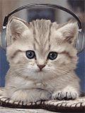 Gatinho ouvindo música!