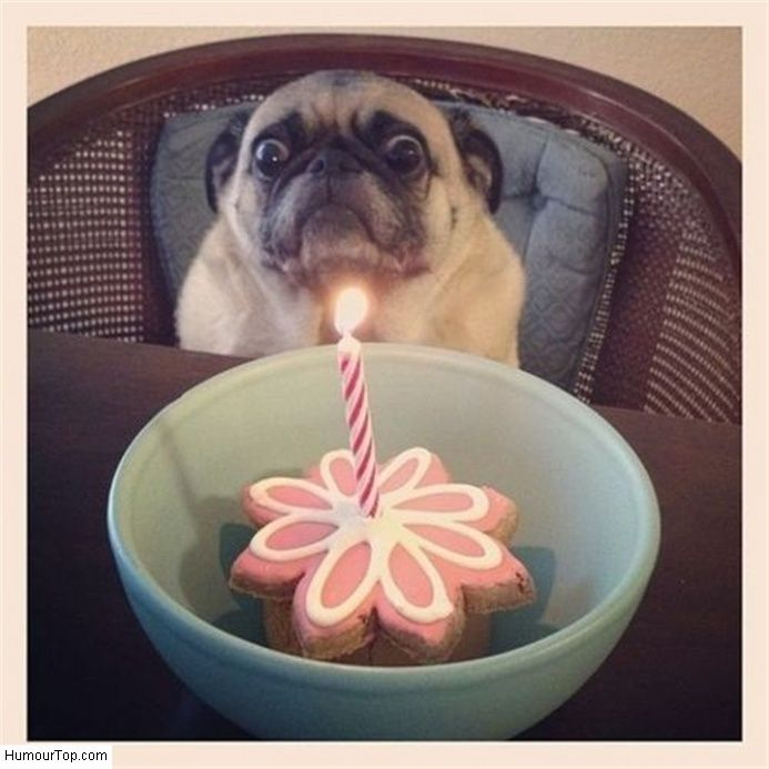 Happy Birthday! Oh, that dog's confused birthday face is awesome. Hope he calmed down. Enjoy RUSHWORLD boards, WTF PHOTOS, BARK RUFFINGTON'S DOG KINGDOM and DOG'S DRIVING CARS.  Follow RUSHWORLD! We're on the hunt for everything you'll love?