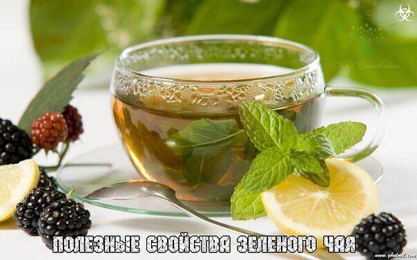 Полезные свойства зеленого чая  Ввиду того, что в составе зеленого чая присутствует достаточно много полезных компонентов, для спортсменов этот напиток представляет собой источник положительно влияющих на организм веществ.  Танин  Эти компоненты представляют собой фенолы, полифенолы и группу флавоноидных элементов. Растительный танин является прекрасным вяжущим средством, при воздействии на слизистую он заставляет ее съеживаться, а протеиновые вещества – сжиматься. Иными словами, зеленый чай…