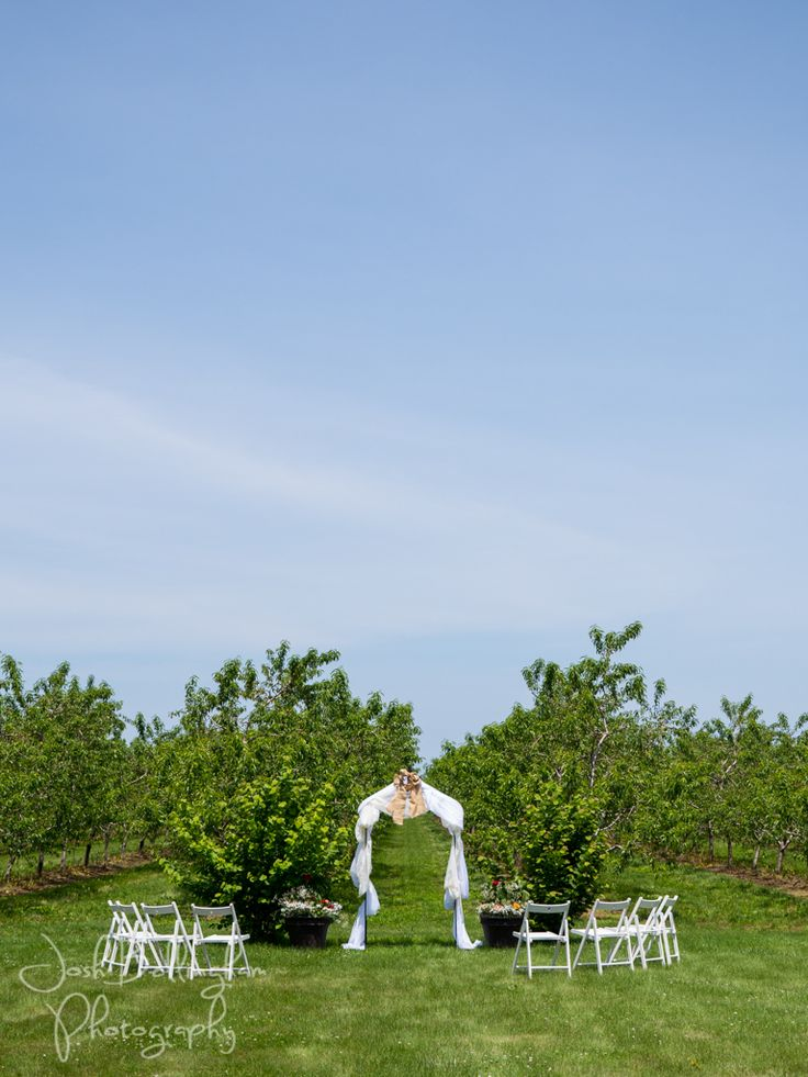 Gorgeous ceremony in an Orchard in Jordan Station Niagara. Orchard Croft Weddings. #JoshBellinghamPhotography