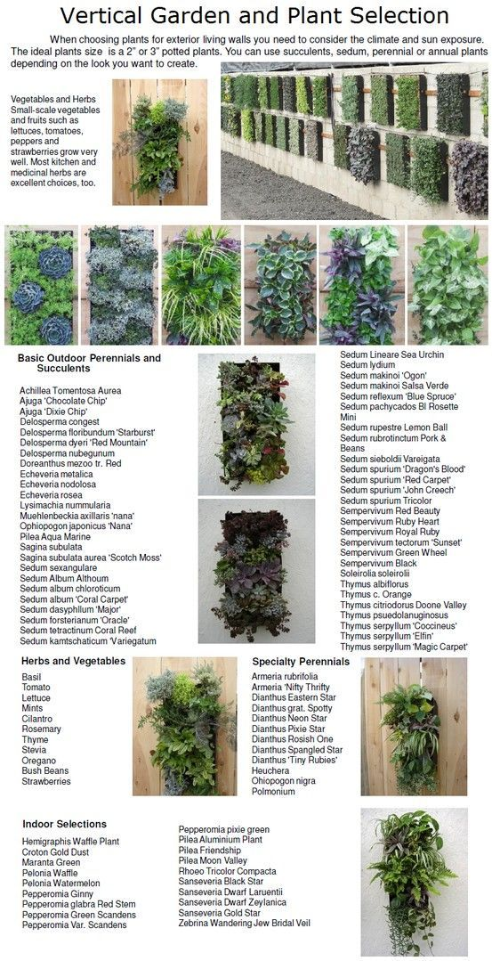 Vertical Garden and Plant Selection