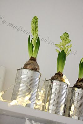 grow flowers in recycled cans