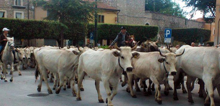 25-28 maggio 2015: dalla Puglia al Molise si ripete il rito della #Transumanza -> http://www.mangiareinmolise.it/site/25-28-maggio-2015-dalla-puglia-al-molise-si-ripete-il-rito-della-transumanza/