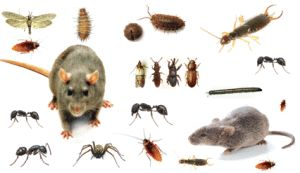 Pest Control Pros 1001 Southwest 5th Avenue 1100 Portland, OR 97204 503-436-5620