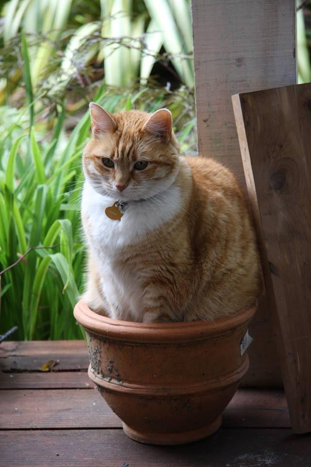 Typisch Katze :D