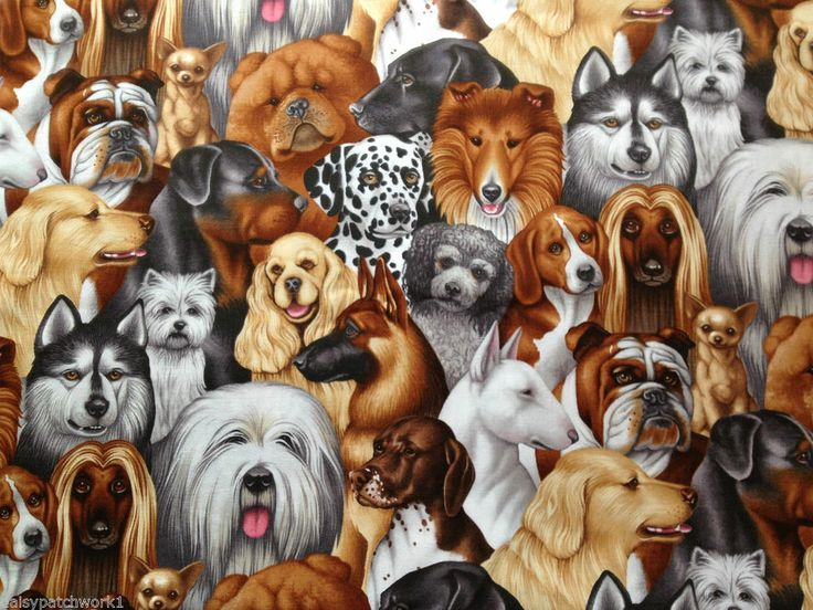Dog Faces Cotton Fabric Pet Puppy Westie Boxer Spaniel Beagle Husky Dalmation 1m