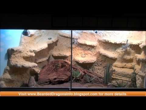 diy lizard terrarium - Google Search - Best 25+ Lizard Terrarium Ideas Only On Pinterest Tortoise