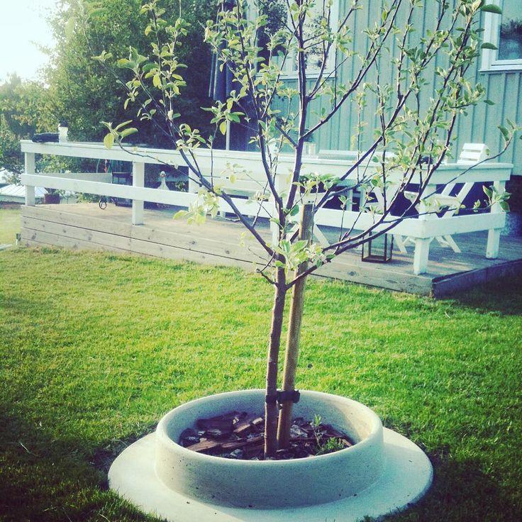 Snart kommer våren o det är dax o plantera igen! Snygg lösning #planteringsring #automower #automowersverige #elmiagardenaward2017 #träd #trädplantering #trädgård #trädgårdsdesign #trädgårdsinsperation #robotgräsklippare #park #betongdesign #markanläggning #marksten #landskapsarkitekt #trädskydd #smartlösning #instagarden #garden #gardendesign #torg #landscaping #gardenlover #landscapedesign #trädring #grönytor #fastighetsskötsel #lättklippt