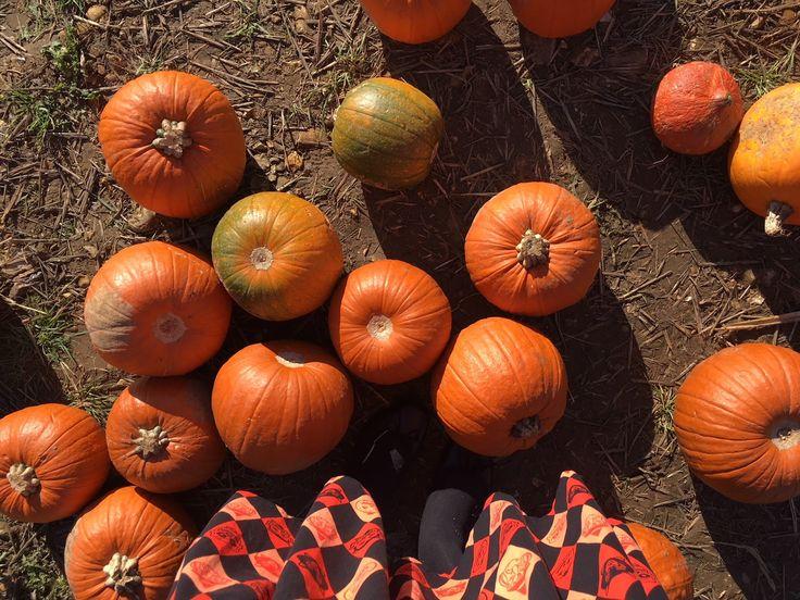 New Blog Post// Winters first pumpkin picking! Read all about it on http://www.luluslittlewonderland.com/2017/10/pumpkin-picking-halloween-2017-popup.html?m=1